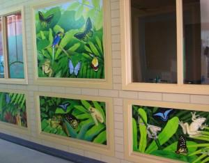 Australian Rainforest Frogs and Butterflies